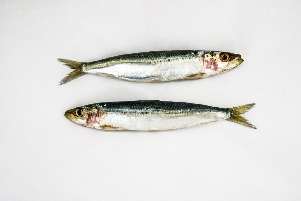 This image has an empty alt attribute; its file name is sardines-3732726_1920-1024x683.jpg